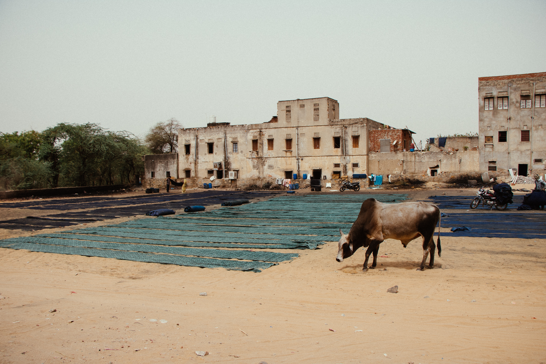 Rajasthan, India. 2018